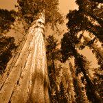 Sequoia Park foto